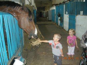 Децата и животните